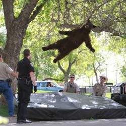 Bear from popular New Mexico photo was troublemaker in '02