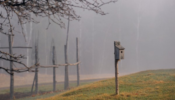 A cool, damp and foggy morning in Eddington on April 11, 2012.