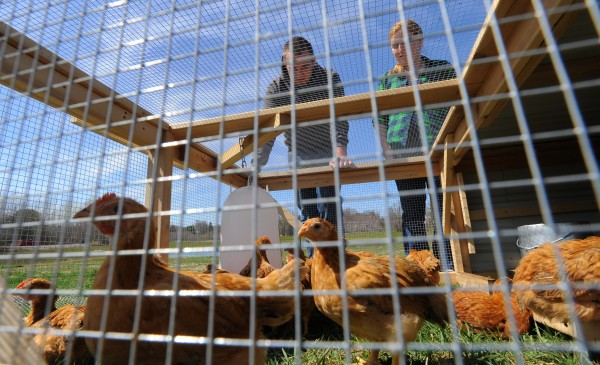 Shayne Van Leer (left) and Maddy Kane are among the Unity College students participating in a new program called Pastured Poultry for Food Security.