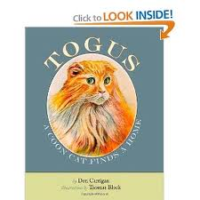 Togus, A Coon Cat Finds a Home