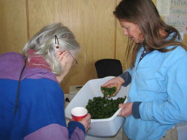 During Saturday's Fiddlehead Festival at the University of Maine at Farmington, Ellen James, right, of Island Farm in Avon shows fiddleheads she picked Friday to customer Harriet Brickman of Farmington, who bought a pound. &quotI'm getting a real understanding of what is behind the local food that I eat,&quot Brickman said of the festival's importance.
