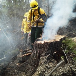 Woods fires may be result of arson