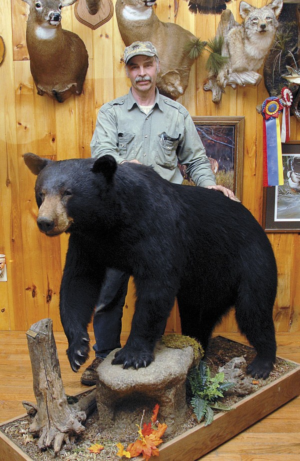 Taxidermist John Dykstra, who owns Northland Taxidermy in Alton, mounted this 346-pound black bear that his son, Peter, shot in Greenfield.