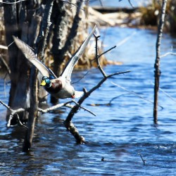 Wildlife abounds at Essex Street Marsh