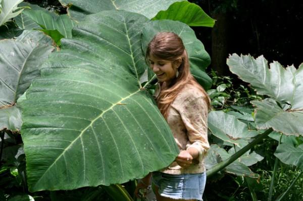 Rachel Briggs at the Lyon Arboretum in Honolulu, Hawaii