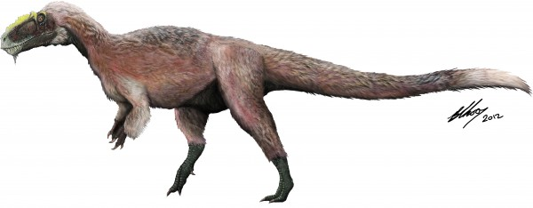 This artist concept provided by the Beijing Institute of Vertebrate Paleontology and Paleoanthropology shows a new species of tyrannosaur, Y. huali, discovered in China. A new study published in the journal Nature found that Y. huali, an earlier relative of T. rex had a feathery coat, suggesting that the king of dinosaurs may have also been fuzzy.