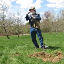 Bath to get 2 saplings cloned from Gettysburg 'Witness Tree'