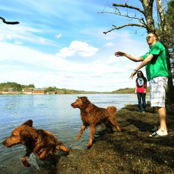 "Chris Rabideau (right) along with Tara Tweedie, both of Eddington exercise, Reese and Sam, their two golden retrievers along the Penobscot River in Brewer on Thursday, April 26, 2012. ""They love it here,"" said Chris. With warmer weather coming on the two dogs get wet in the Penobscot more often."