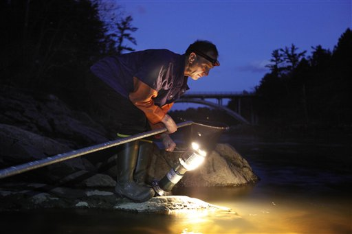Bruce Steeves uses a lantern while dip netting for elvers on a river in southern Maine. Elvers are young, translucent eels that are born in the Sargasso Sea and swim to freshwater lakes and ponds where they grow to adults before returning to the sea. Adult eels are sold for food in Asia.