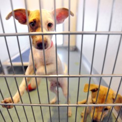 Bangor animal shelter gearing up to adopt out first wave of southern 'transfer dogs'