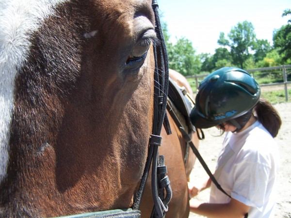 A student at Wild Ivy Farm in Bangor tacks up Jolly for a lesson. Learning and performing the grooming process is an important part of riding.