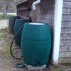 The three rain barrels (oldest is farthest away) on Saturday await the coming rainstorm.