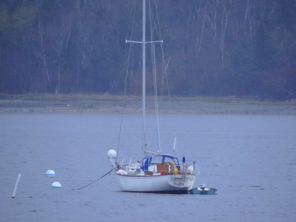 The owner of a sailboat moored in Stockton Harbor in Stockton Springs was found dead on the shore early Friday morning. The man, whose name is not being released, is believed to have fallen into the water Thursday night while climbing from a skiff into the sailboat.