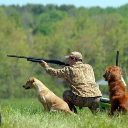 Man's best friend is focus at Wassookeag Retrievers