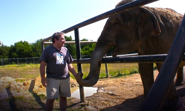 Jim Laurita, a veterinarian in Hope, stands with Rosie, a 42-year-old retired circus elephant.