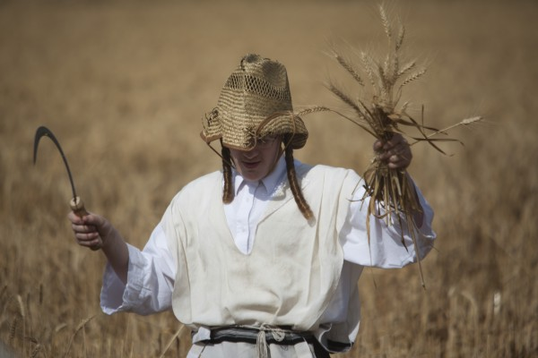 An Ultra Orthodox Jewish man harvests wheat ahead of the Jewish Shavuot holiday, in a field outside the Israeli community of Mevo Horon on Sunday, May 20, 2012. The Jewish holiday of Shavuot, commemorating Moses receiving the Ten Commandments and also a harvest holiday, begins next Monday at sundown.