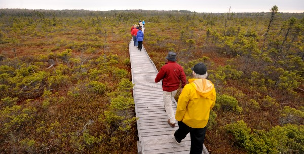 People walk on the Orono Bog Boardwalk shortly after it was opened for the season. The event marked the start of the 10th year for the boardwalk.