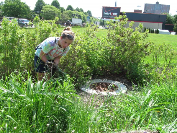 Kelsey Jackson of the organization Portland Trails pulls weeds from a special garden intended to absorb stormwater and keep it from running into the sewer system Thursday, May 31, 2012, during a city tour of sites tied to a massive system overhaul.