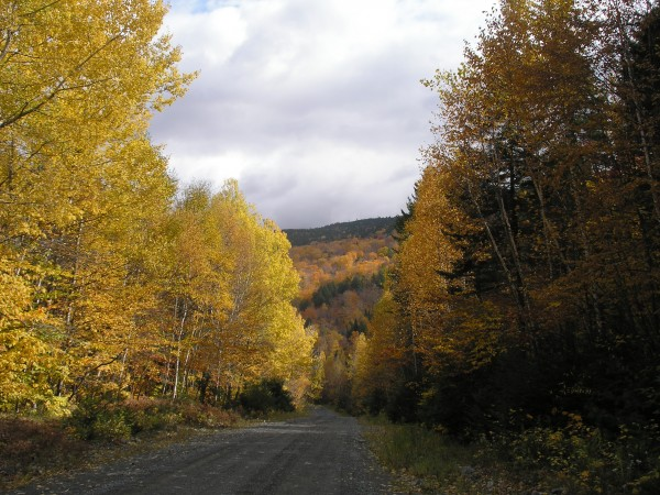 The Maine north woods are intriguing year-round but never more beautiful than in the fall.