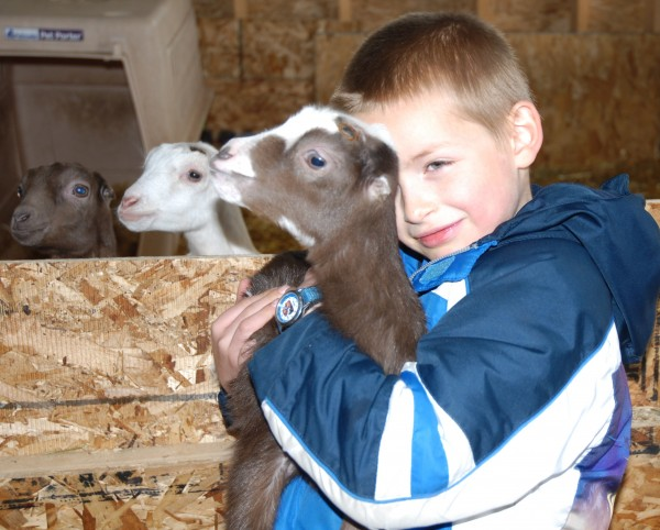 At Talk of the Town Farm there is always time for cuddling with kid goats. James Shrewsberry, 7, takes a moment to show off his favorite goat while its siblings make a play for their own time in the limelight.
