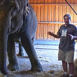 'The Road to Hope': Story of bullied circus elephant inspires theater director