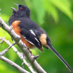 Birding events abound in May