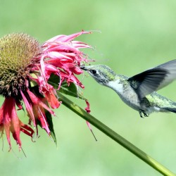 Plants to keep birds humming