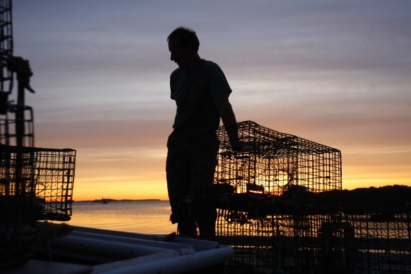 Lobsterman Bruce Steeves pauses while stacking traps at dawn in Portland in June 2009, a year of a bountiful harvest.