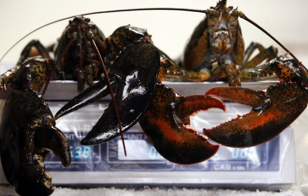 Two large lobsters are weighed on a scale at a fish market in Bath in December 2009.
