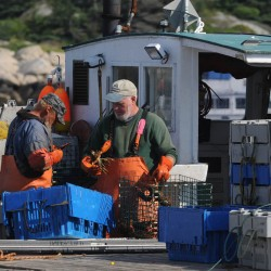 Lobster shell disease inching into Gulf of Maine