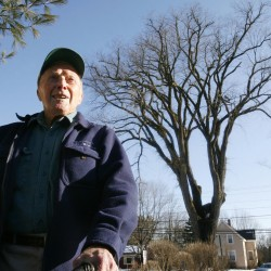 Yarmouth man can't save 240-year-old elm