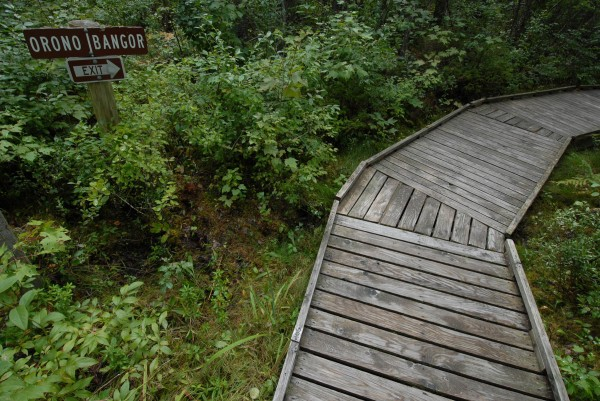 The Orono Bog Boardwalk will be the site of World Wide Knit in Public Day on Saturday, June  9.