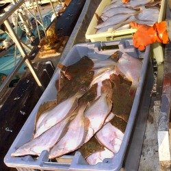 Midsized vessels with new gear will be allowed to fish yellowtail flounder
