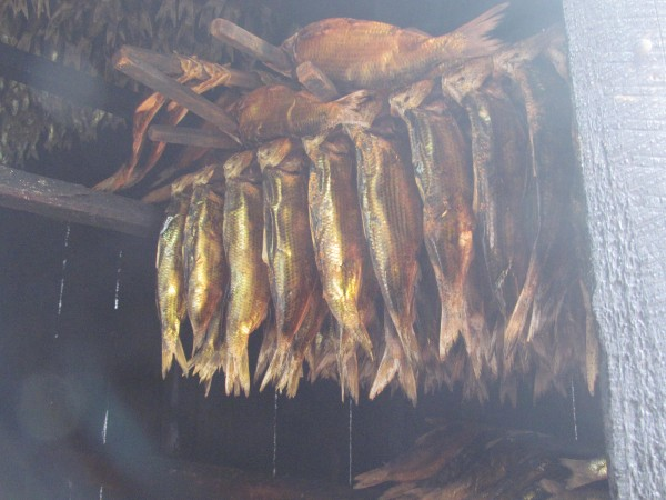 The larger of the alewives harvested at Nequasset Creek in Woolwich are salted and smoked, as is shown in this photo from Sunday, May 13, 2012, for at least four days before being sold to diners who enjoy their taste. Most of the alewives, however, are used for lobster bait.