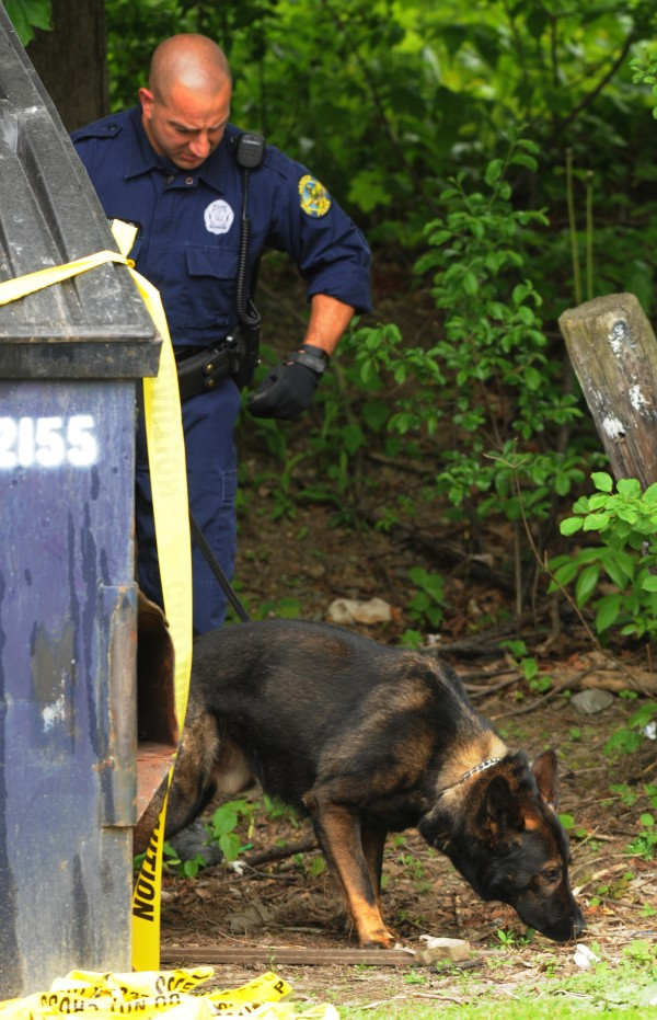Bangor Police officer Rob Angelo and his K-9, Karan, search for clues near 67 First St. during the stabbing investigation on Tuesday, May 22, 2012, which left one man dead.