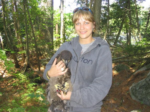 Kristin Peet, shown here with an eagle chick, was recently honored as the biologist of the year by the Native American Fish & Wildlife Society. Peet has been the big game biologist for the Penobscot Indian Nation for the past seven years.