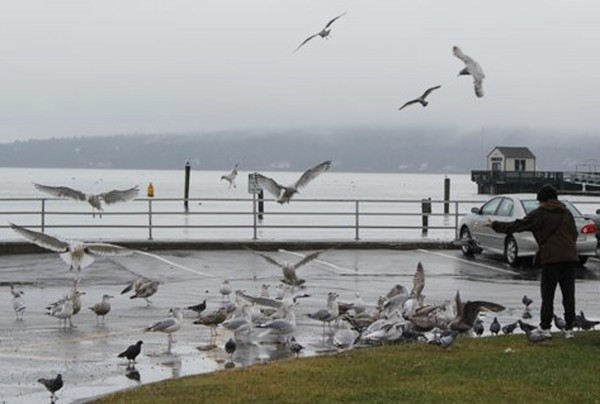 A November 2010 photo of a man feeding birds near the waterline in Rockland.