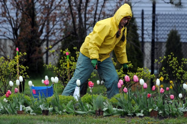 Susan Beebe works in a flower bed near the Rockland water treatment plant on Tuesday, May 8, 2012. Beebe has lived on the midcoast for 26 years. &quotIt's a lot better now than when I moved here,&quot she said.