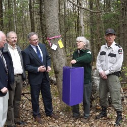 No dangerous invasive insects found in Maine Forest Service traps