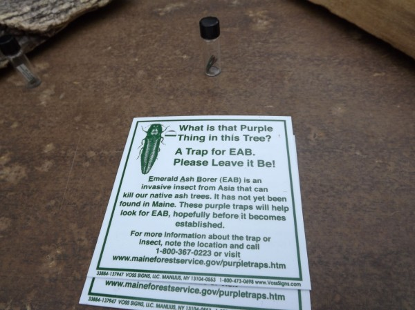 A sign that will be posted to every ash tree that has a purple trap designed to capture emerald ash borer beetles is displayed during a press conference at Maine Forest Service's Bolton Hill Facility in Augusta on Thursday, May 3, 2012.