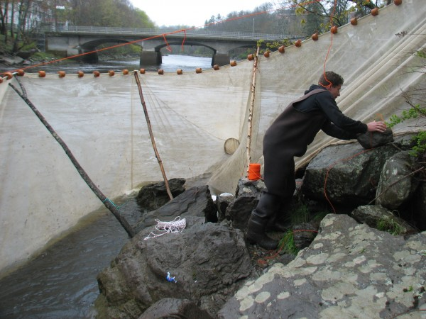 Jeff Card of Ellsworth sets up a fyke net for catching elvers in the Union River in Ellsworth on Wednesday, May 9, 2012.