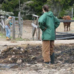 New draft horse team arrives as Darthia Farm rebuilds from devastating fire