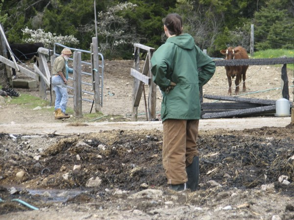 Marissa Venturi, an apprentice at Darthia Farm in Gouldsboro, stands Friday, May 11, 2012, in a muddy pit where a barn had burned down five days before, killing more than 80 animals that were inside. Bill Thayer, seen in the background, and his wife Cynthia plan to rebuild the barn and acquire new animals, he said Friday.