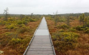Photo by Aislinn Sarnacki. The Orono Bog Boardwalk is slick with rain at 10 a.m. Monday, May 1, the boardwalk's opening day and 10th anniversary.