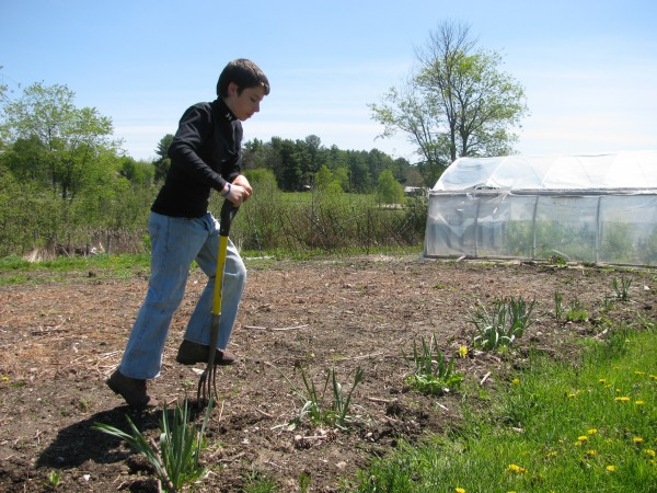 Austin Merando of Belfast, a 7th-grader at Troy Howard Middle School, spends a lot of time working in his school's garden. He said he thinks it will be a good thing if the RSU 20 school district serves more locally grown food.