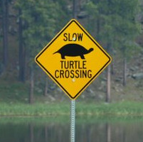 Slow Turtle Crossing >> Maine Installing Turtle Crossing Road Signs Outdoors Bangor Daily