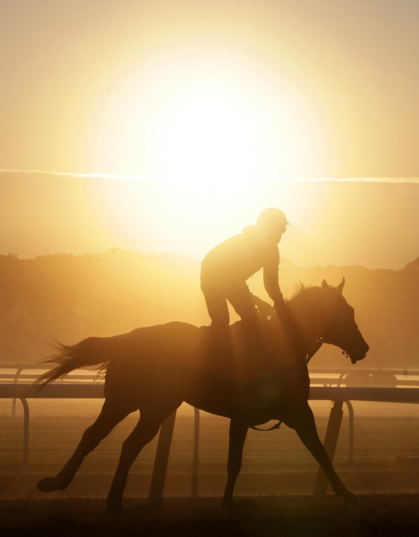 A horse trains at Belmont Park, Wednesday, June 6, 2012 in Elmont, N.Y. The Belmont Stakes horse race is Saturday.