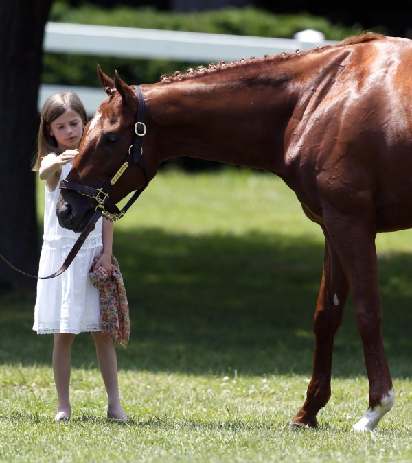 Eliza McCalmont pets Kentucky Derby and Preakness winner I'll Have Another during a news conference at Belmont Park in Elmont, N.Y., on Friday, June 8, 2012. I'll Have Another's bid for a Triple Crown ended with the shocking news that the colt was out of the Belmont Stakes due to a swollen left front tendon. The Belmont Stakes horse race is Saturday.