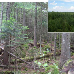 'This is a huge success story': 2 Maine scientists say acid rain effects reversing much faster than expected
