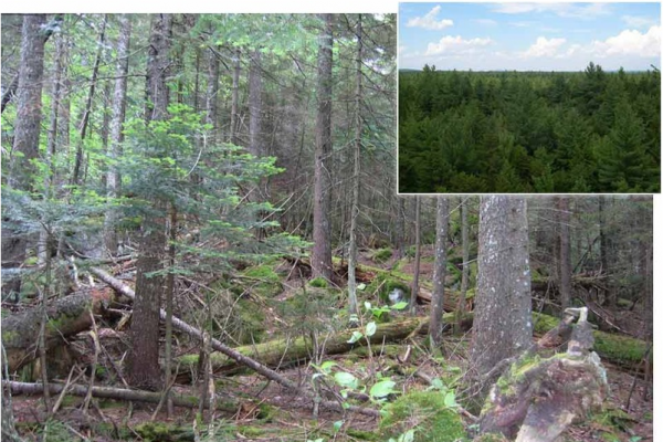 Studies of soils in New Hampshire and Maine (inset) suggest acid rain is still impacting regions of the U.S. northeast.